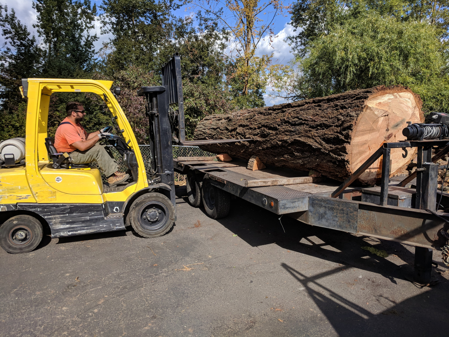 Log salvaging benefits the environment